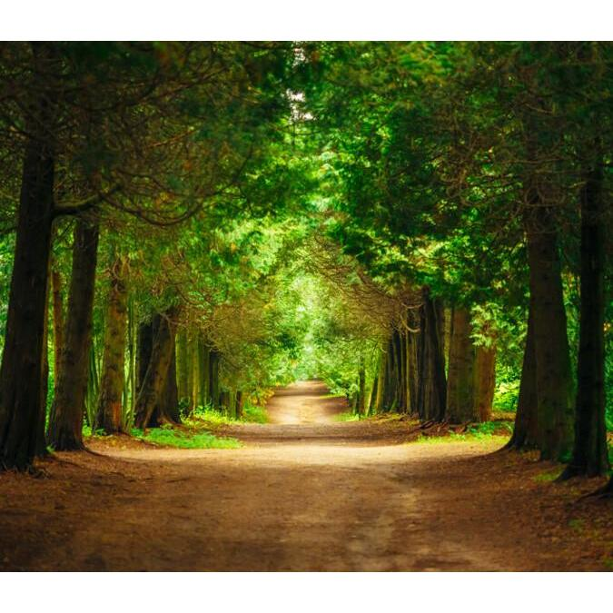 Forest Road 3