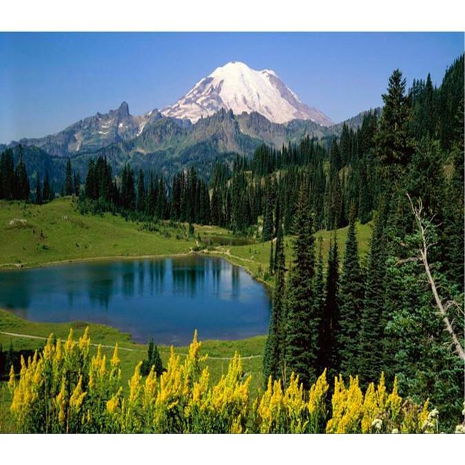 Pine Trees Surround Lake 8