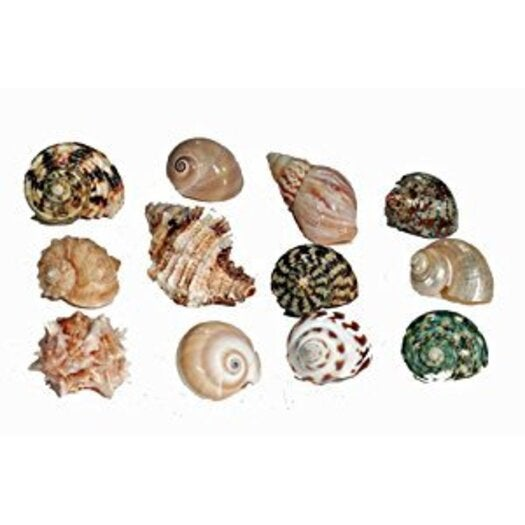 Hermit Crab Spare Shell - Regular - Large