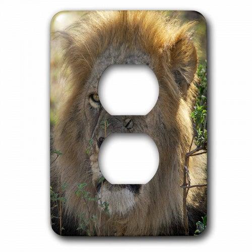 3dRose Lion Masai Mara National Park Kenya Africa - 2 Plug Outlet Cover (lsp_9880_6)