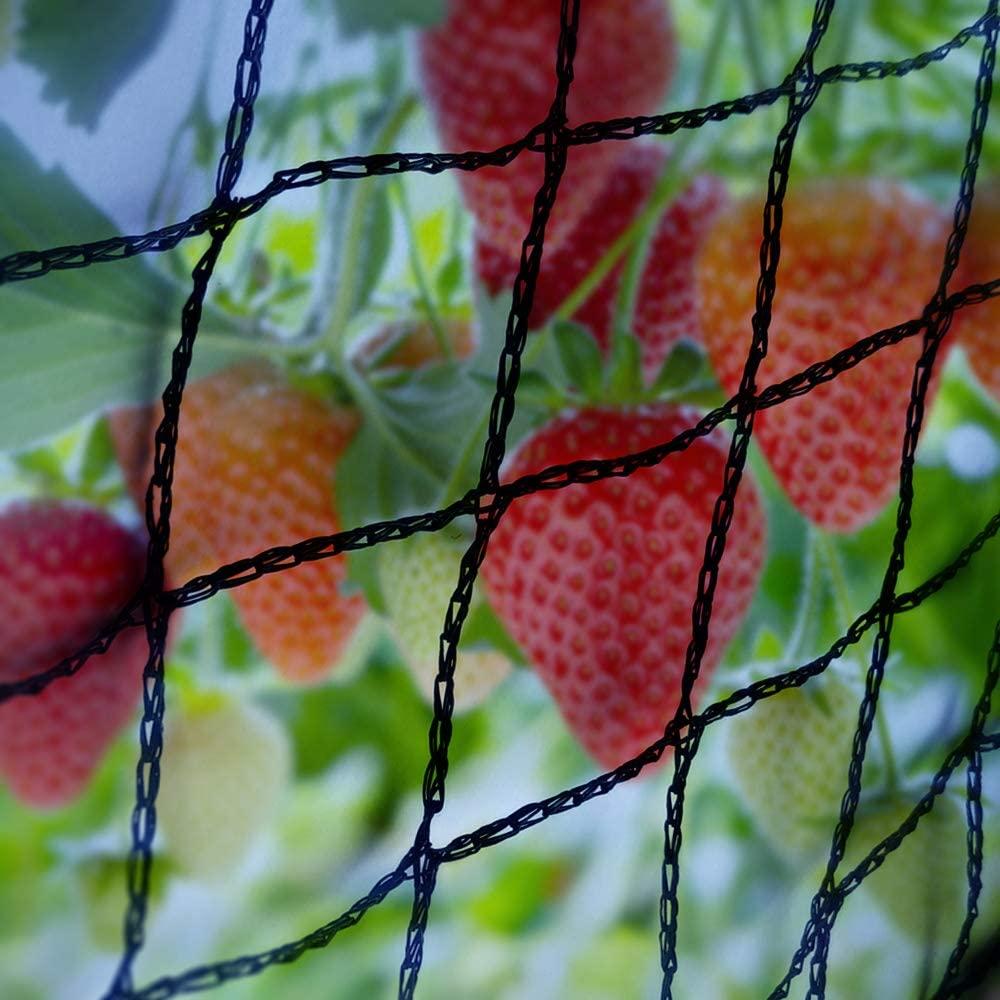 Elixir Gardens Bird Netting Black 2m x 60m - Widths Available 2m 4m 6m 8m 12m 14m 20 Metre ideal Pond Safety Fruit cage Veg net Gardens ®