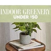 Indoor Greenery Under $50